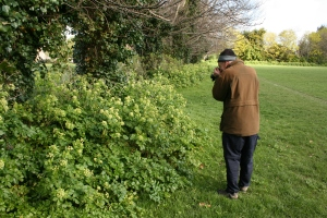 Dad shooting hoverfly