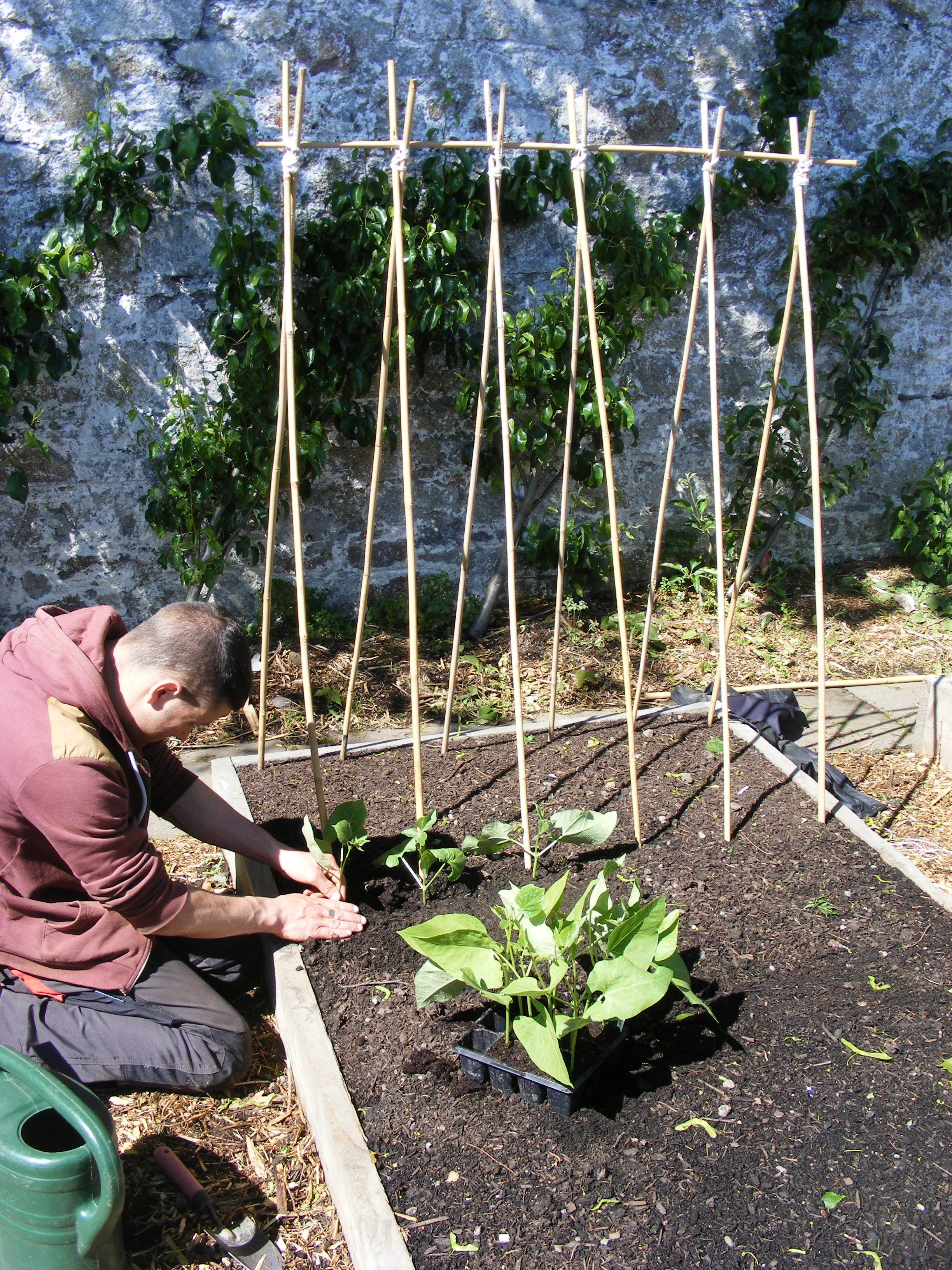 Rotation Pea Supports Etc Gardening Amp Permaculture Design